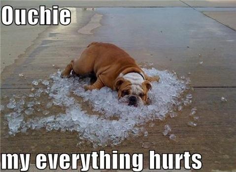 aching dog meme